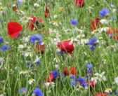 Last chance to apply for on-farm biodiversity grant