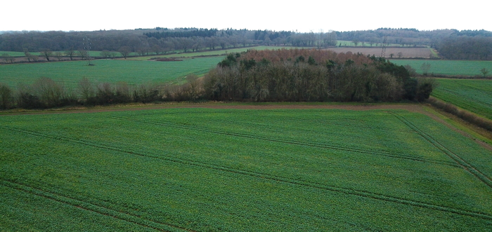 New PT303 Protector Sclerotinia oilseed rape offers complete package to UK growers