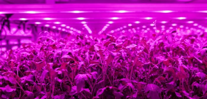 Sustainable start-up Light Science Technologies announced as finalist in Vertical Farming World Awards